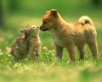 Campo e Animais em Uberaba