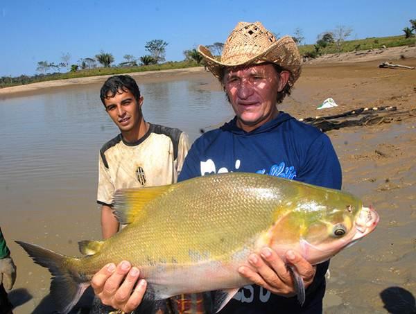 O Governo incentiva a produção de peixes com inseções em taxas de necessidades básicas e outros
