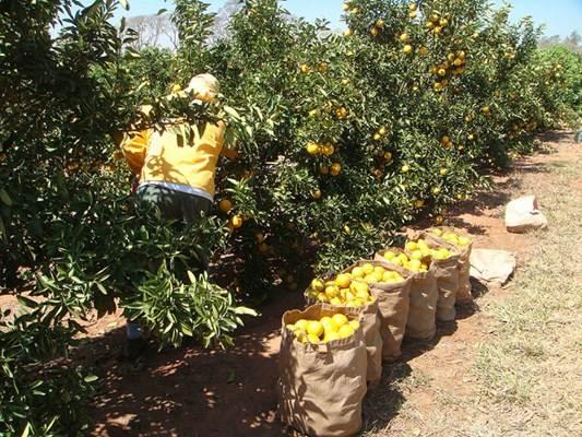 As pesquisas avançam e novos agrotóxicos são criados, destinando às pragas específica de cada espécie, no caso da imagem para frutas cítricas