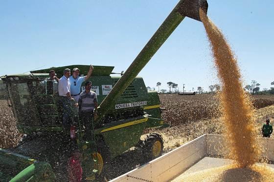Colheitadeira em lavoura de milho