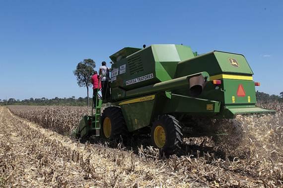 Podadeira em lavoura de milho