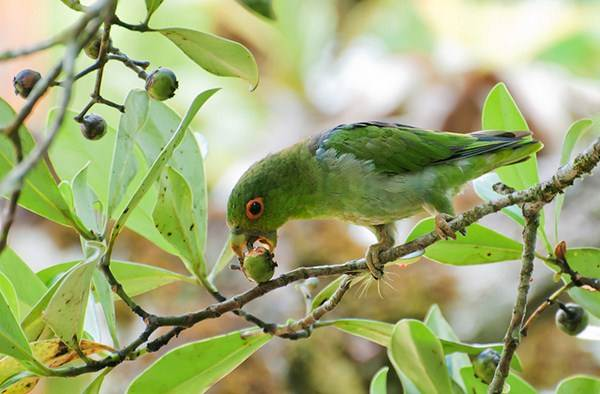 Os pássaros são os principais disseminadores de plantas