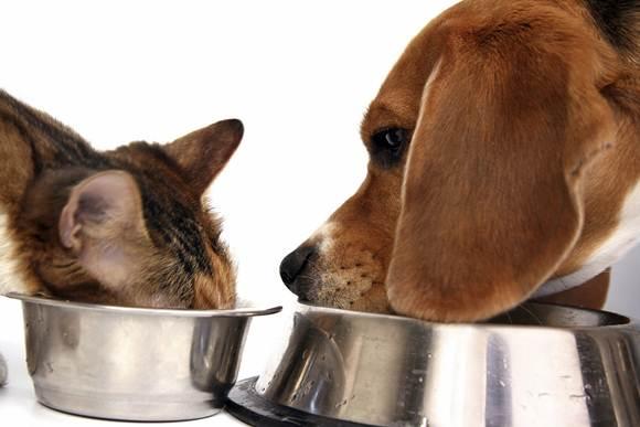 Escolha a ração certa para seu animal