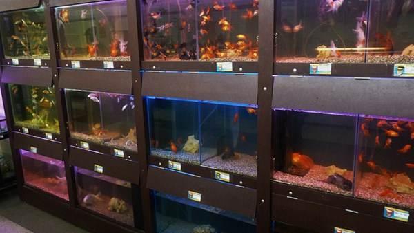 Aquários com diferentes tipos de peixes para venda
