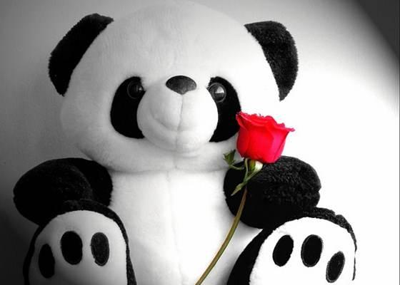 Os ursos de pelúcia é o presente mais procurado para o dia dos namorados