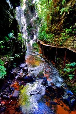 Preservação do meio ambiente, como as nascentes