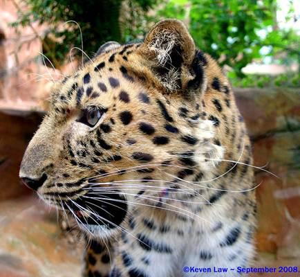 Proteção dos animais silvestres