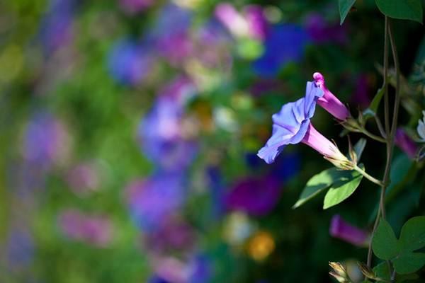 Ecologia estuda formas de preservar a fauna e a flora