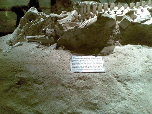 Fóssil descoberto em Peirópolis