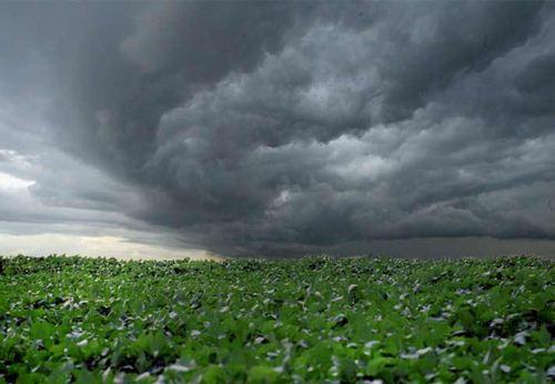 A previsão de tempo em Uberaba influencia na agricultura