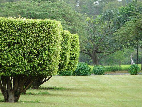 Jardim em Peirópolis